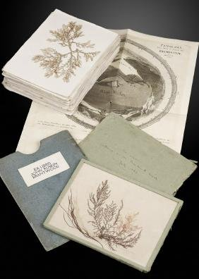 An interesting folio of pressed seaweed specimens