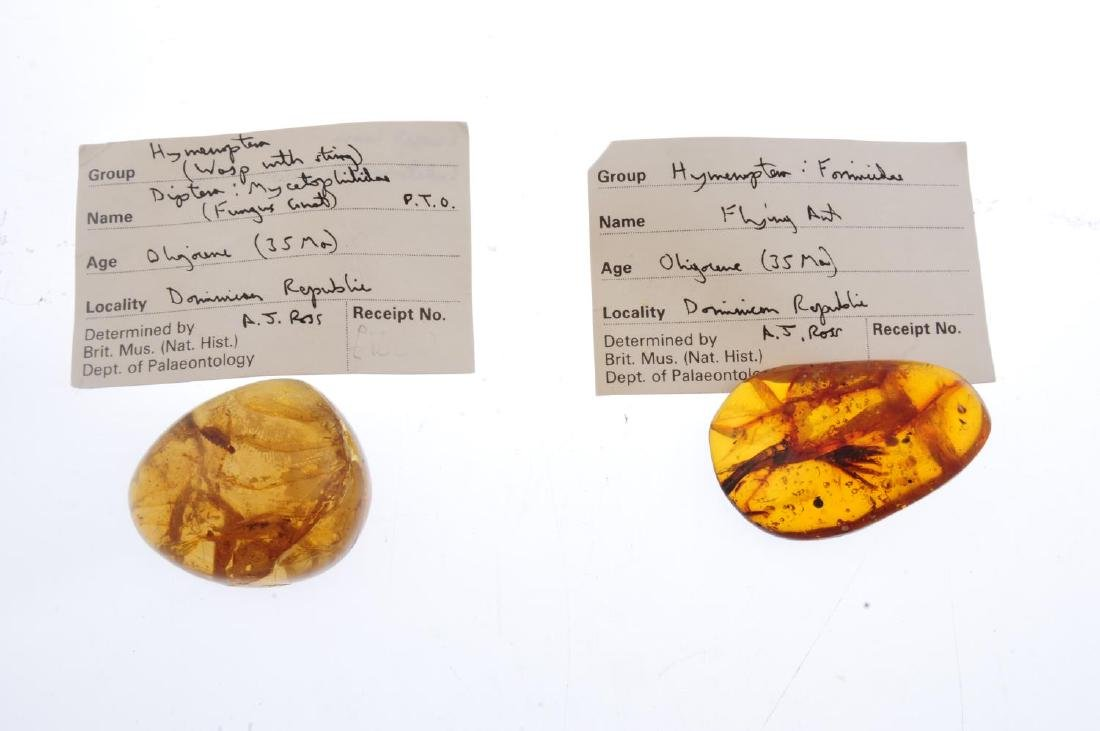 Two pieces of natural Dominican Republic amber with - 2