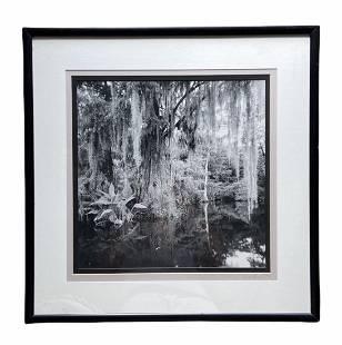 Clyde Butcher (20th c, Florida) Big Cypress Photograph