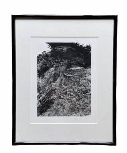 Clyde Butcher (20th c, Florida) Old Cypress Photograph