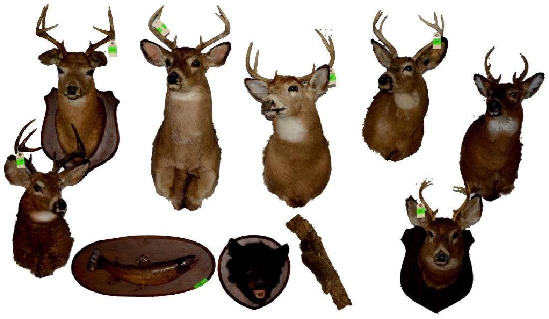 GROUP OF 17 TAXIDERMY ANIMAL MOUNTS. - 2