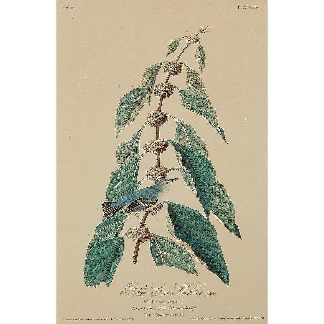 After John James Audubon, Blue-Green Warbler