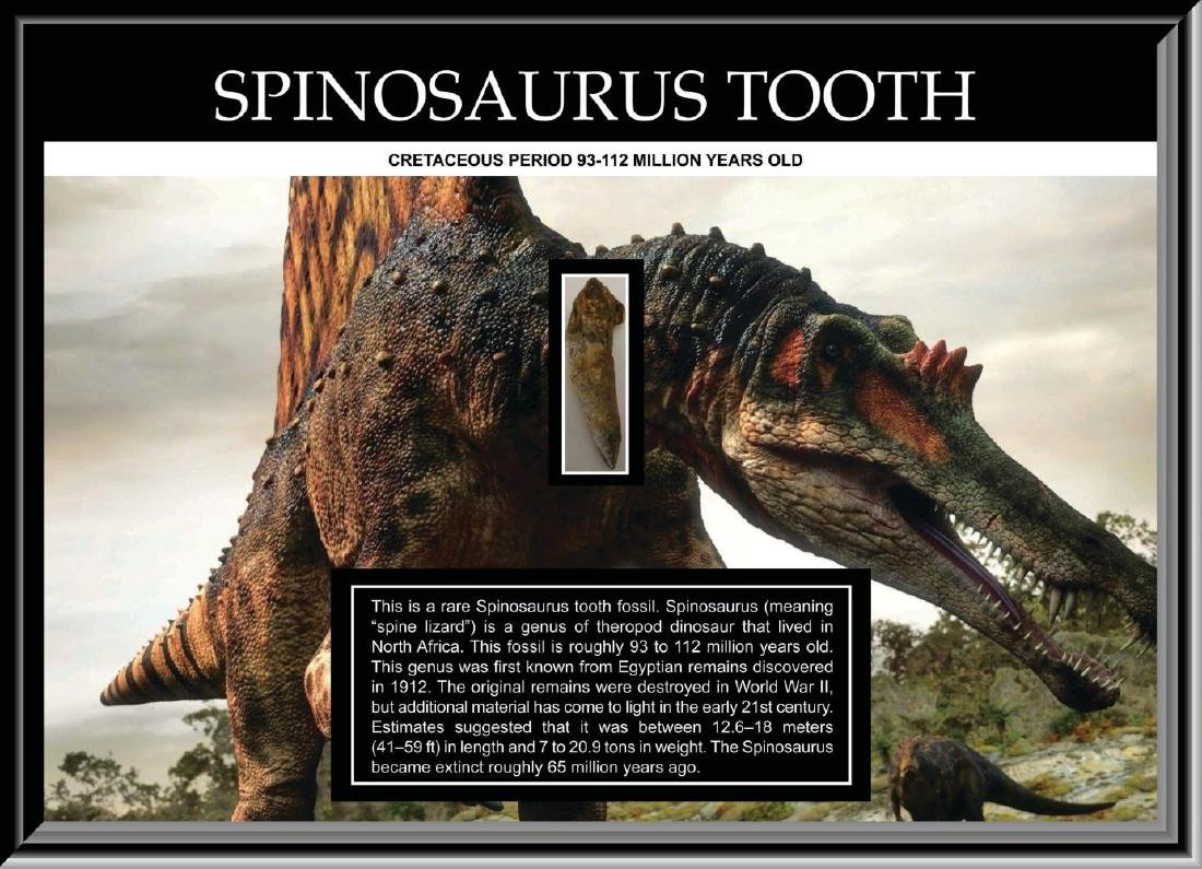 Spinosaurus Tooth Fossil Collage