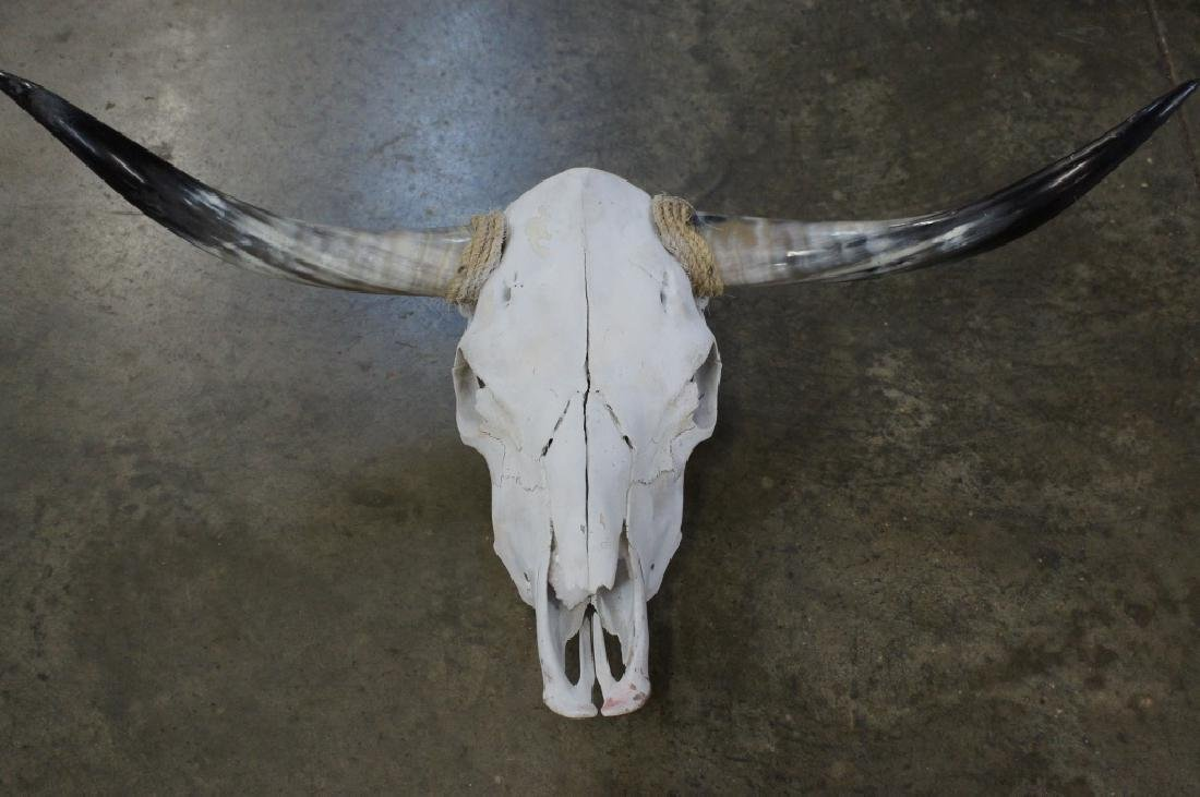 Authentic longhorn skull mount
