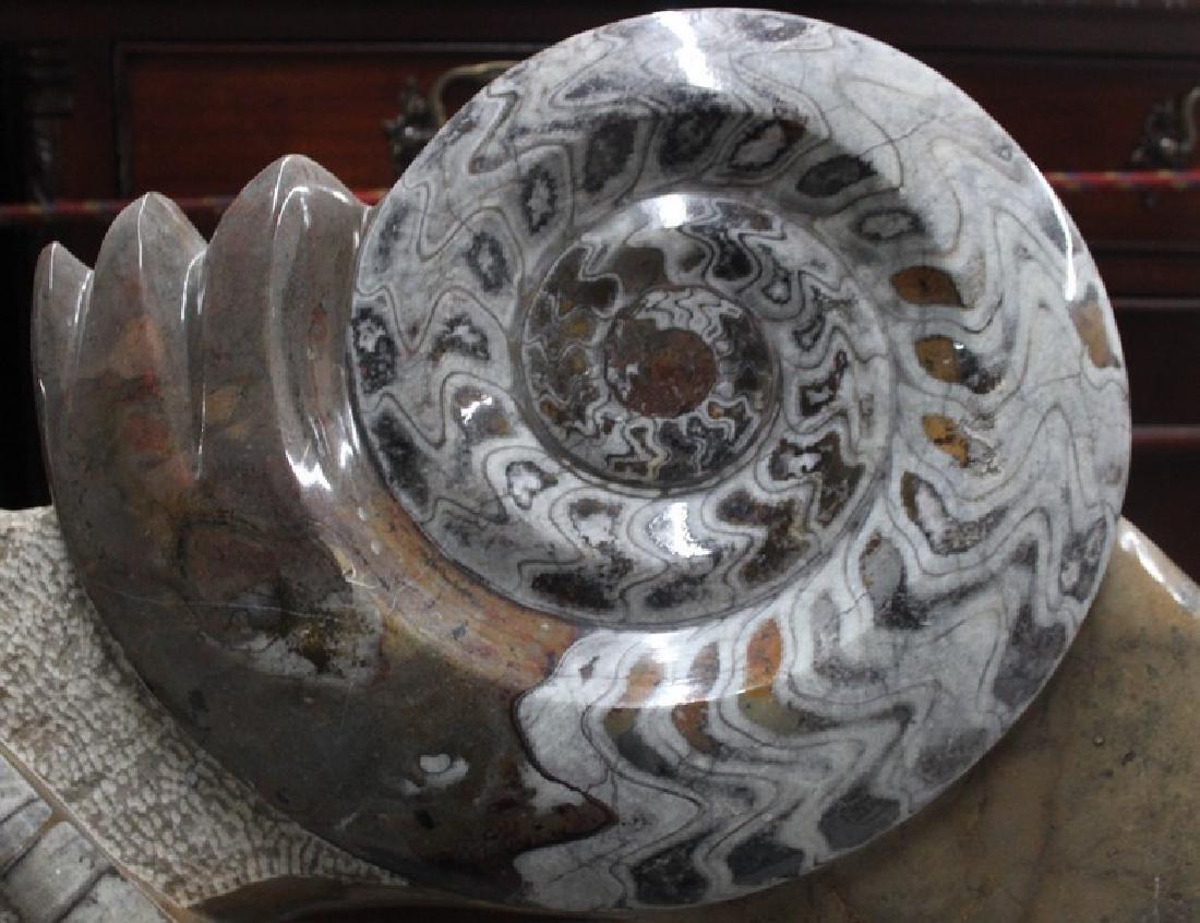 Paleozic Era Fossil - Morocco - 3