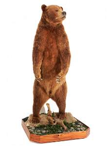 Full Size Standing Brown Bear Taxidermy Mount