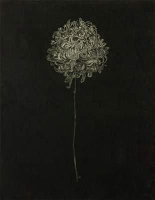 STEVEN BARBASH / Chrystanthemum III, Nightflower (1976)