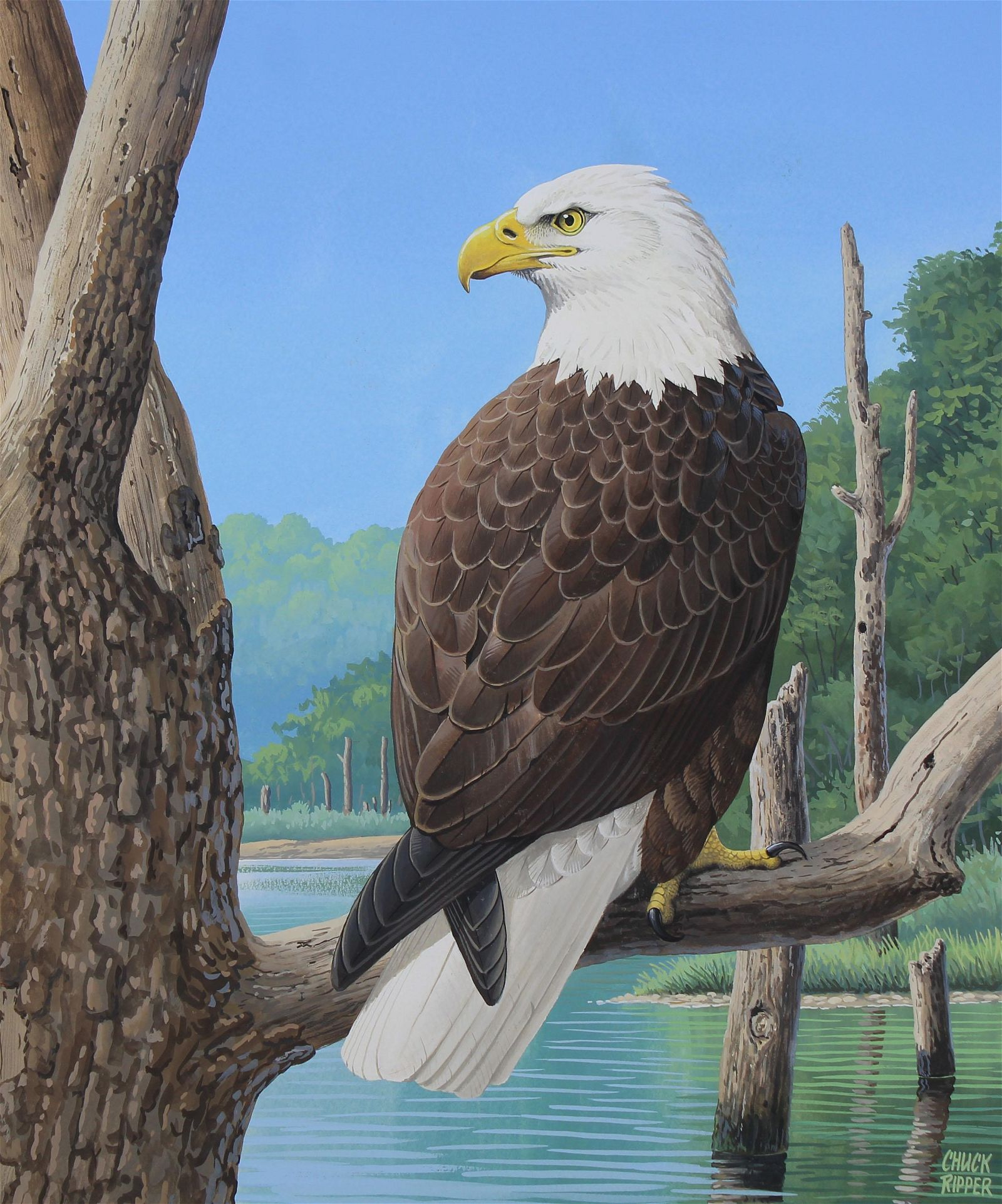 "Chuck Ripper (B. 1929) ""American Bald Eagle"""