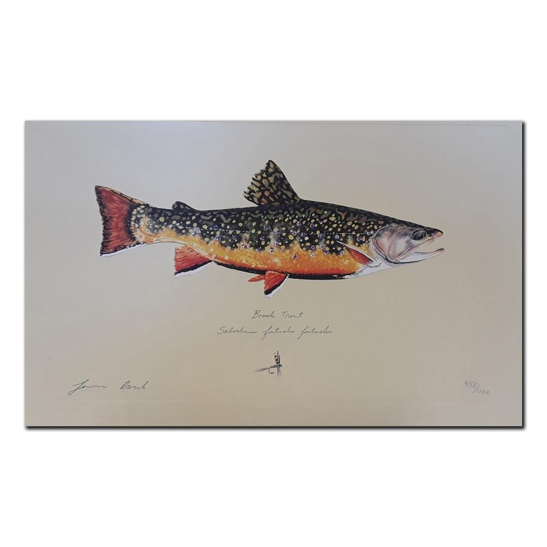 """James Prosek's """"Brook Trout"""" limited edition print"""