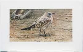 """Robert Bateman's """"Laughing Gull and Horseshoe Crab"""""""