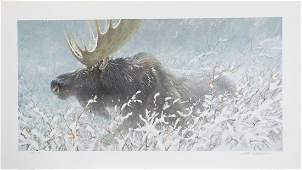 Robert Batemans Winter Run  Bull Moose Limited