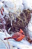 Robert Batemans Winter Cardinal Limited Edition Rigi