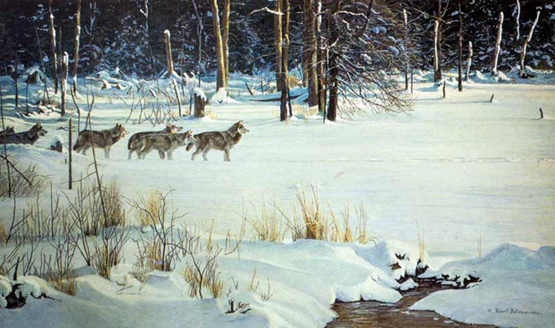 """Robert Bateman's """"Wolves on The Trail"""" Limited Edition"""