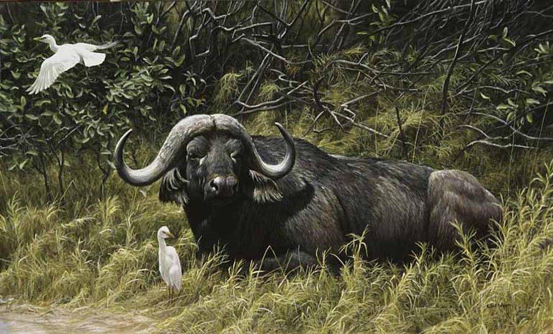 "Robert Bateman's ""A Resting Place - Cape Buffalo"" Limit"