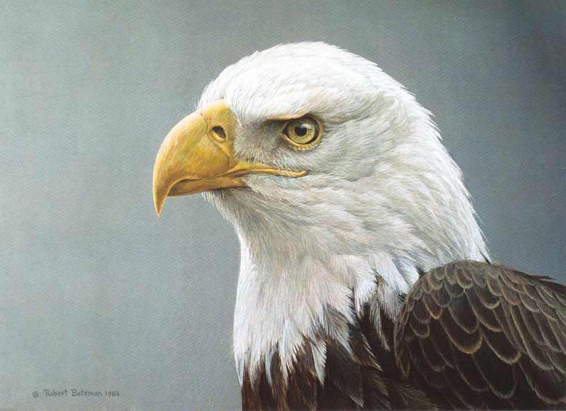 "Robert Bateman's ""Bald Eagle Portrait"" Limited Edition"