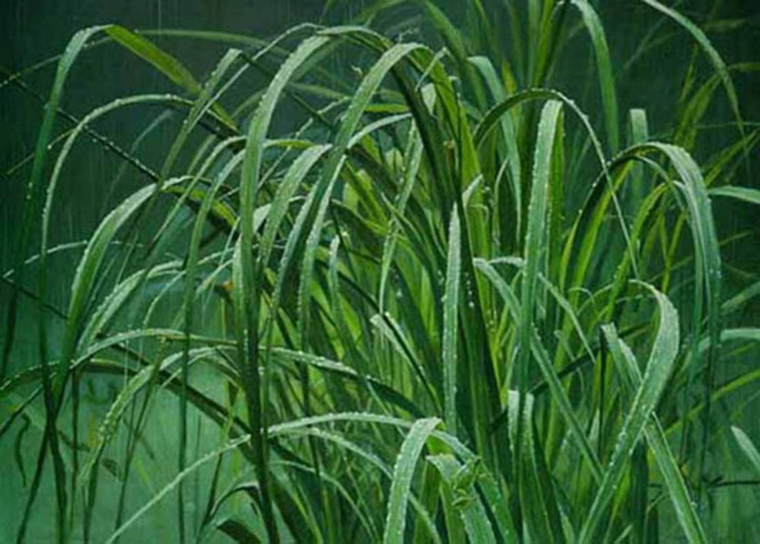 """Robert Bateman's """"Beach Grass and Tree Frog"""" Limit"""