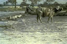 "Robert Bateman's ""Buffalo at Amboseli"" Limited Edition"