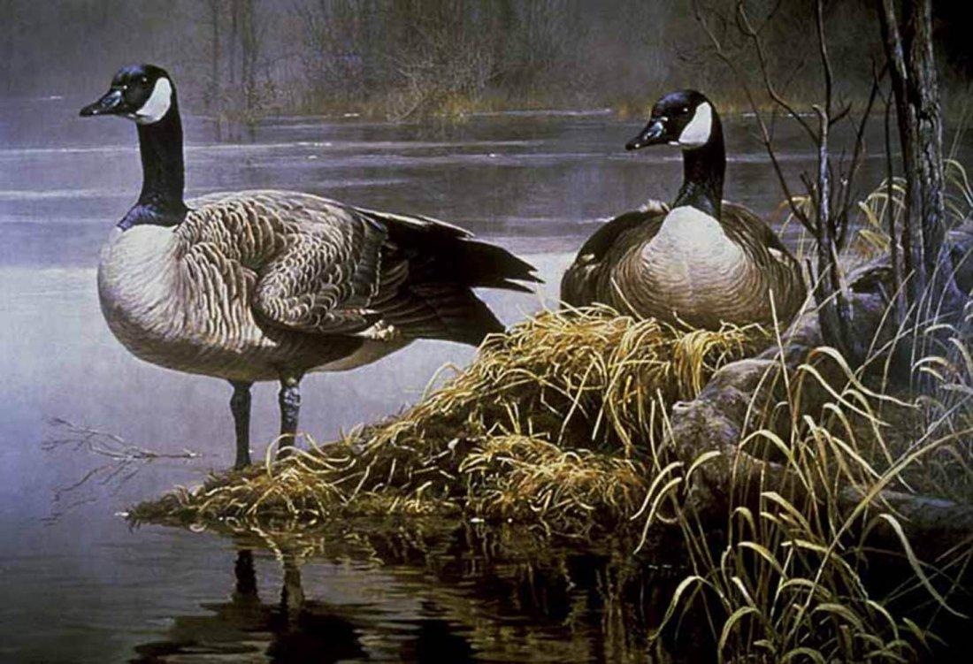 "Robert Bateman's ""Canada Geese Nesting"" Limited Edition"