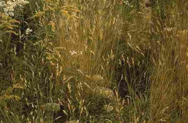 "Robert Bateman's ""Marginal Meadow"" Limited Edition"