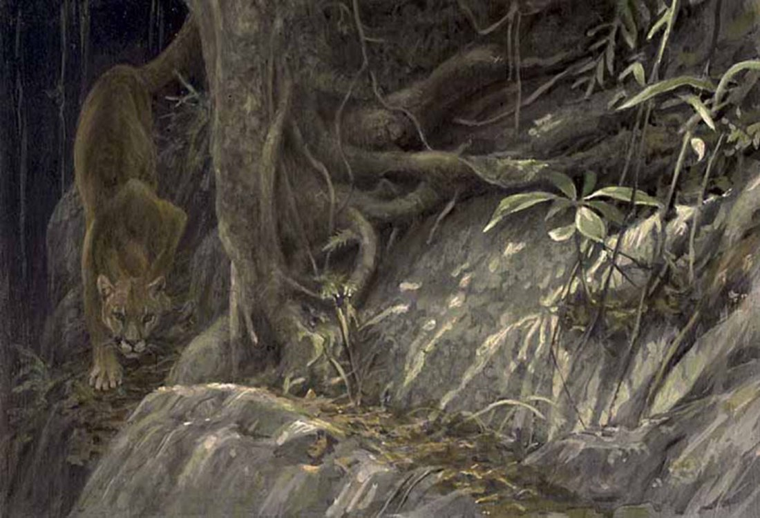 "Robert Bateman's ""Path of the Panther"" Limited Edition"