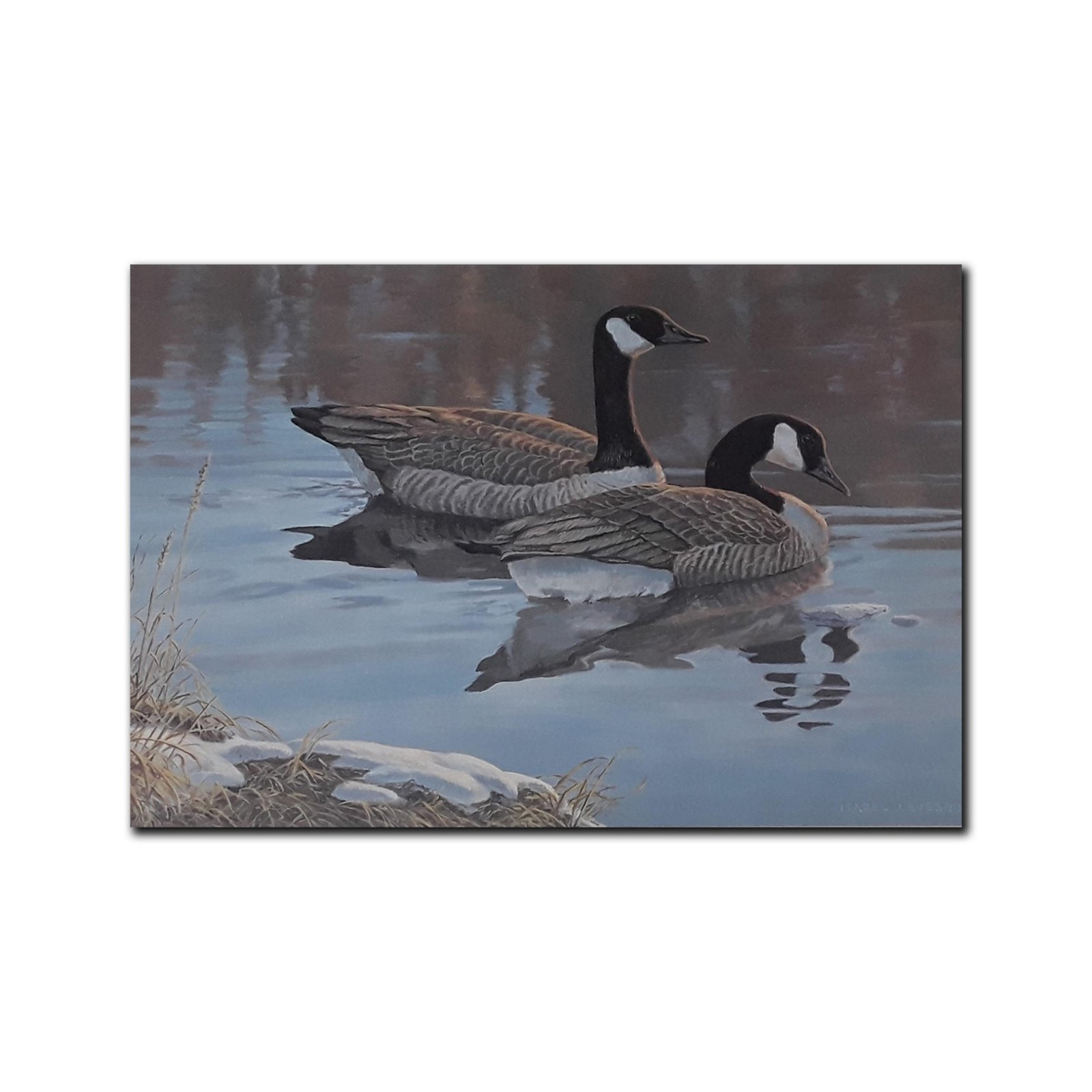 Isabel Levesque's 'Evening Reflections- Canada Geese'