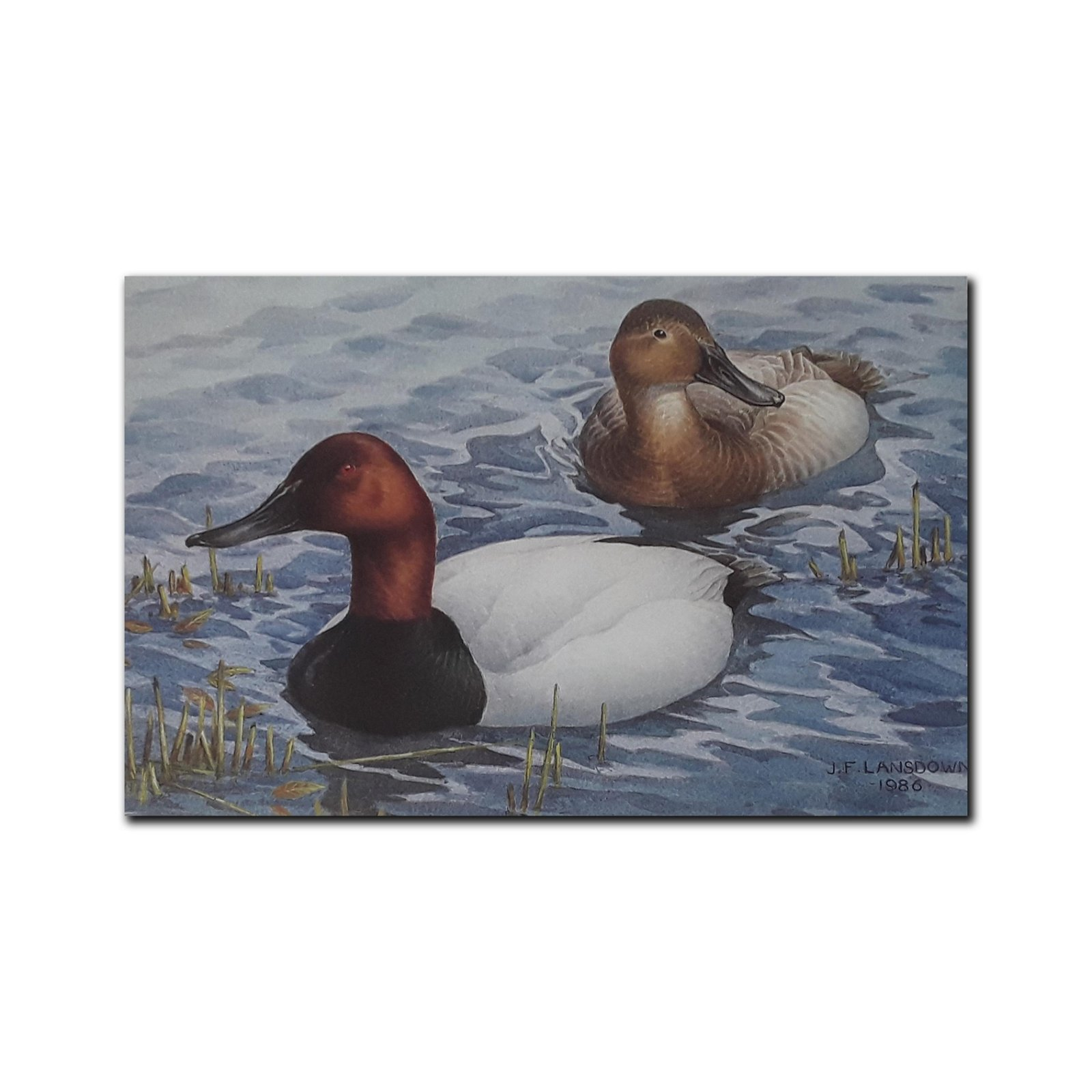 J Fenwick Lansdowne's 'Canvasbacks in Spring' Limited