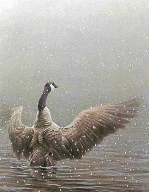 "Robert Bateman's ""Stretching - Canada Goose"" LE Canvas"