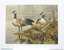 Robert Batemans Canada Geese  Nesting Limited