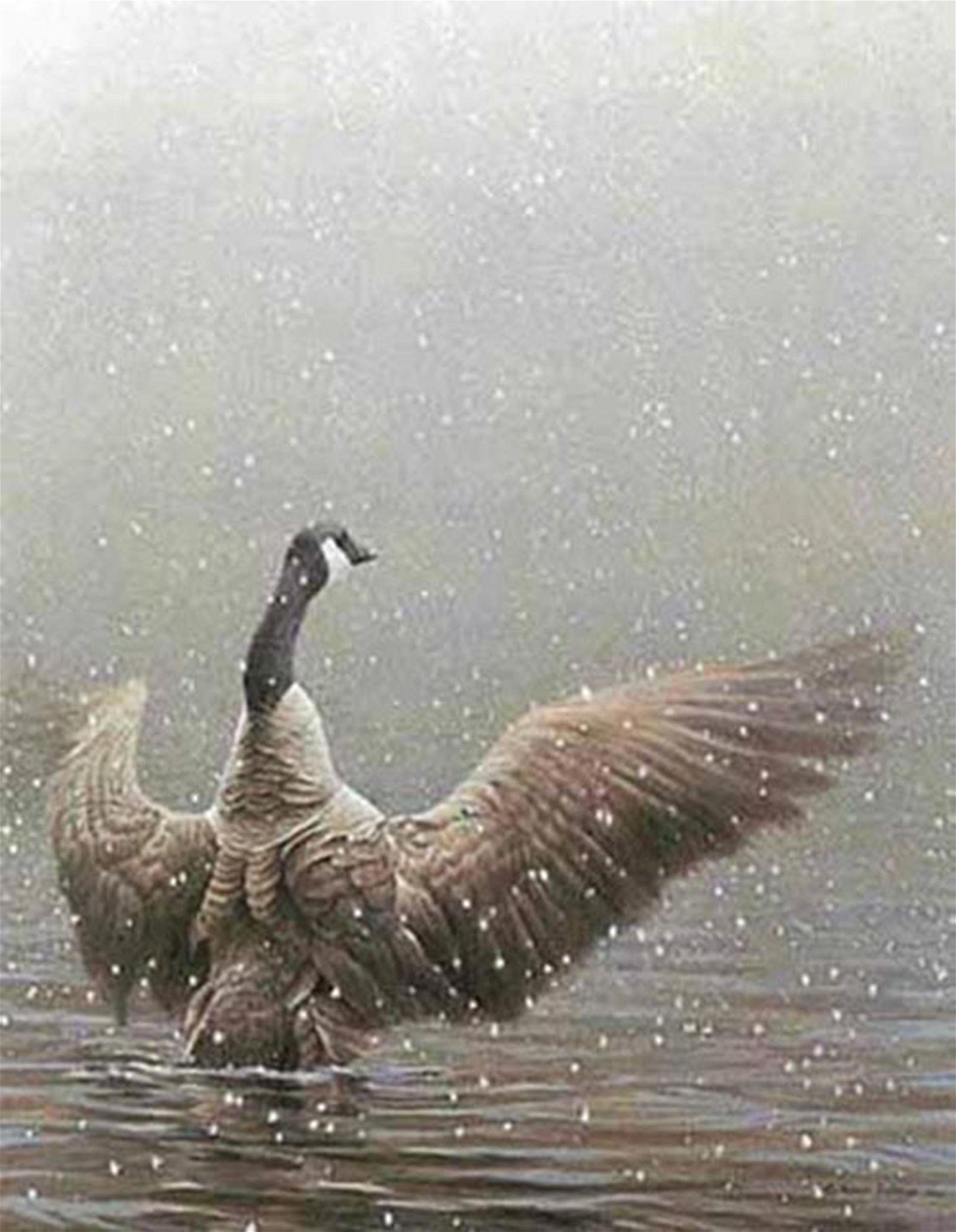 "Robert Bateman's ""Stretching - Canada Goose"" Limited"