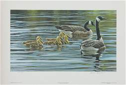 Robert Batemans Canada Geese With Young Limited