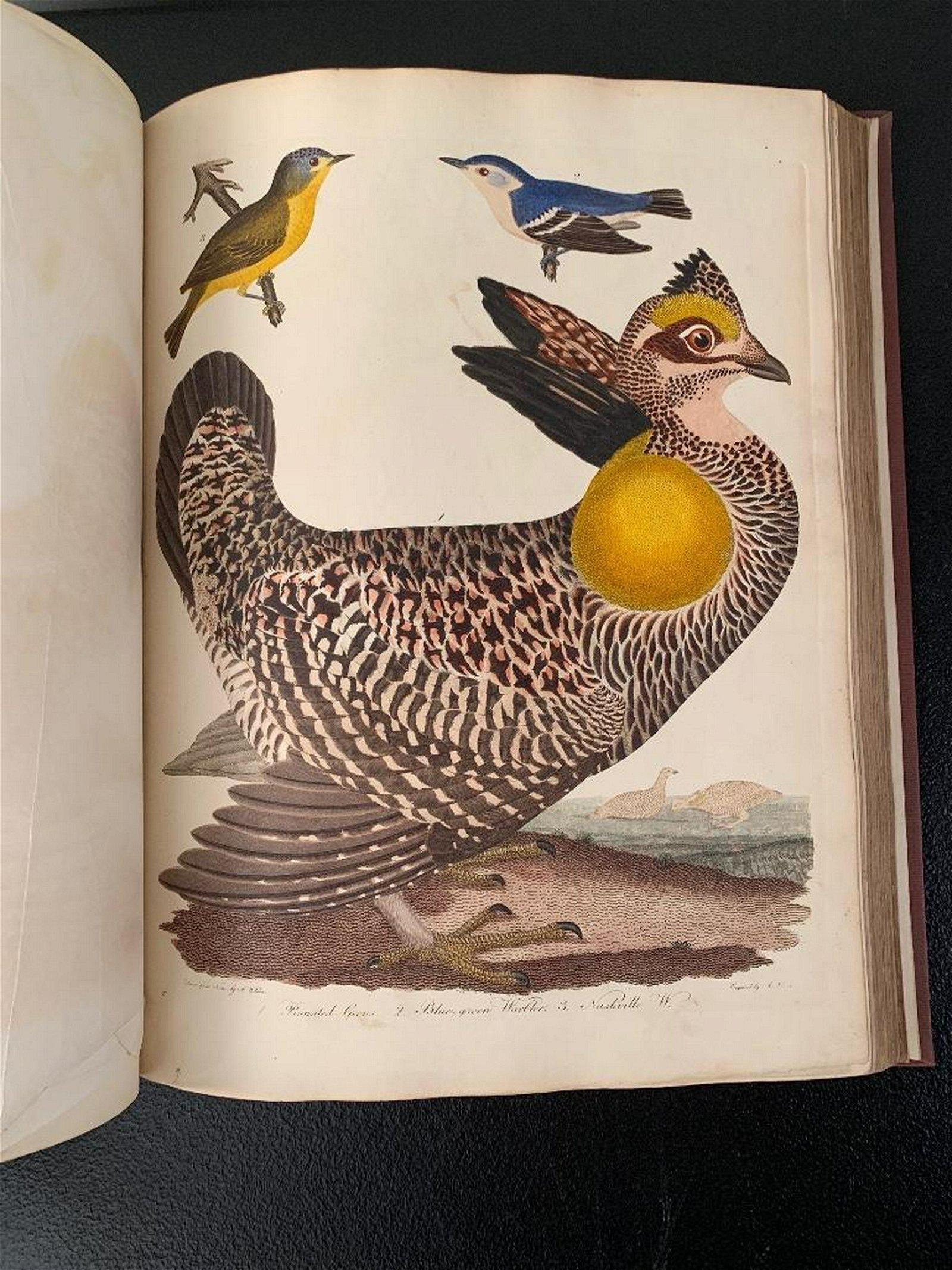 Wilson,Alexander, American Ornithology, Plates