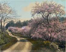 Wallace Nutting  Curve Shadow and Bloom