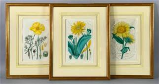Three Hand Colored Botanical Prints, S.Curtis