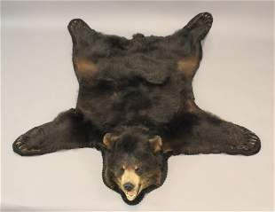 Canadian Black Bear Skin Rug