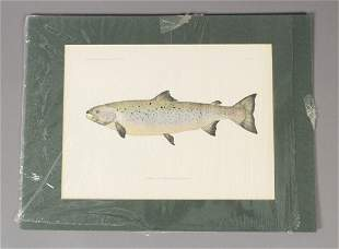 The Fishes of New England Part Two Salmon