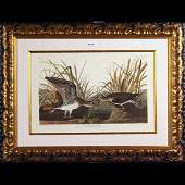 John James Audubon-Solitary Sandpiper