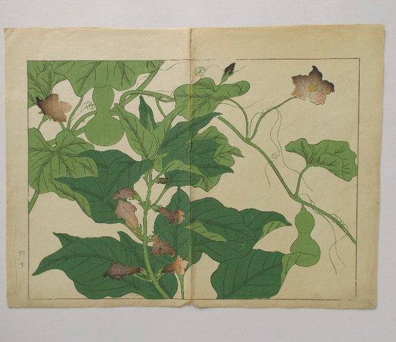 Sakai Hoitsu, Garden Plants, 1st woodblock print 1907