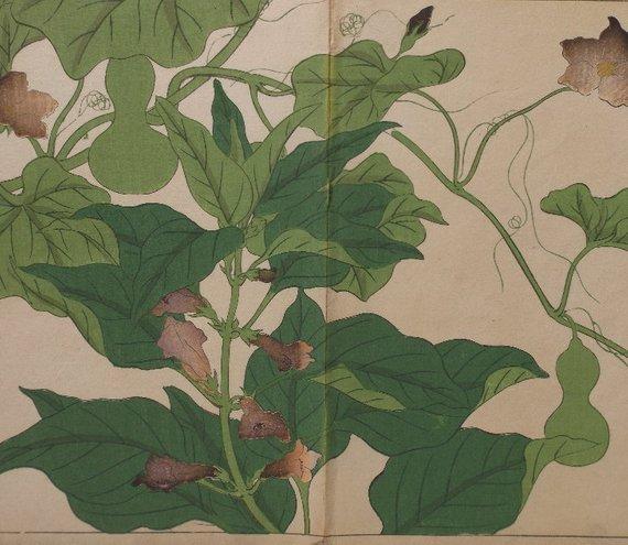Sakai Hoitsu, Garden Plants, 1st woodblock print 1907 - 2