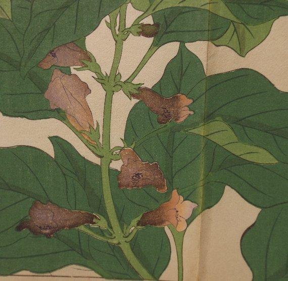 Sakai Hoitsu, Garden Plants, 1st woodblock print 1907 - 3