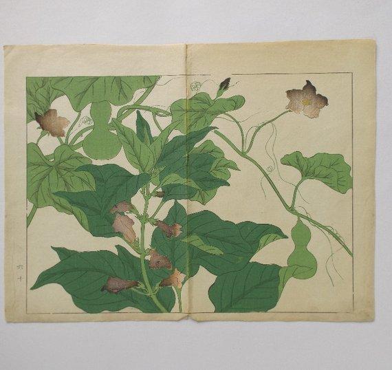 Sakai Hoitsu, Garden Plants, 1st woodblock print 1907 - 4
