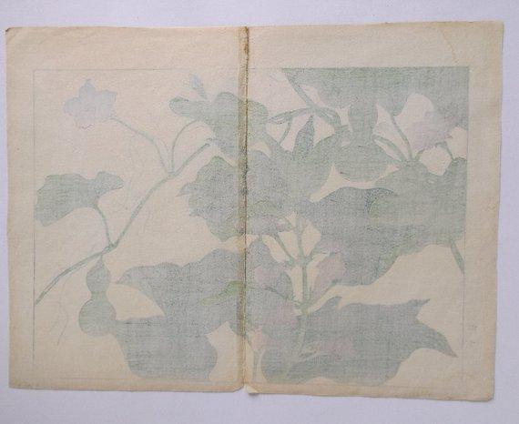 Sakai Hoitsu, Garden Plants, 1st woodblock print 1907 - 5