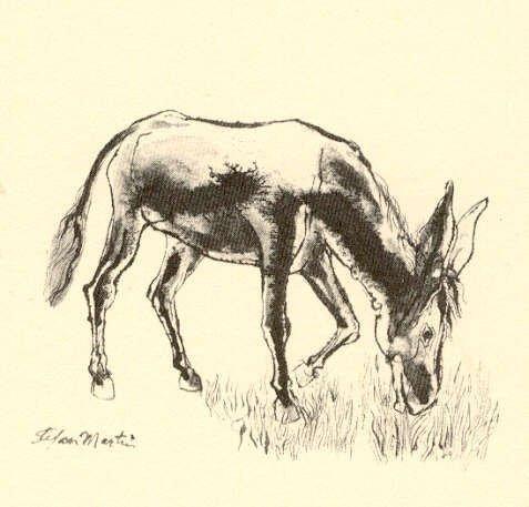 Sarton, Poet and the Donkey 1st Ed 1969 Martin ill. - 3