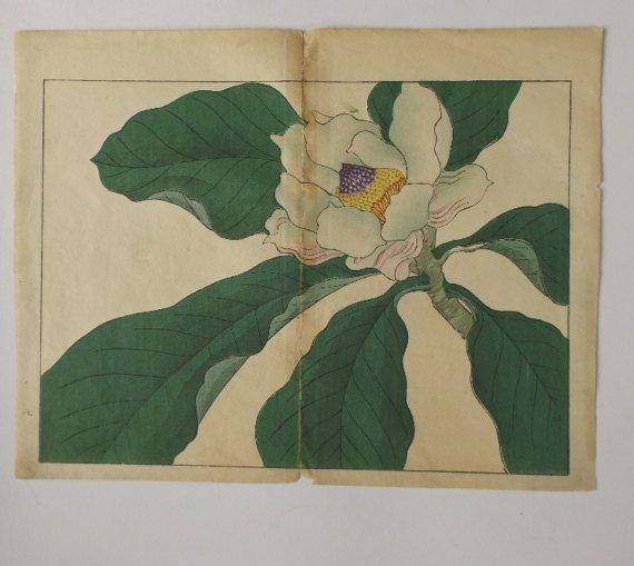 Sakai Hoitsu, Magnolia Blossom, woodblock print 1907