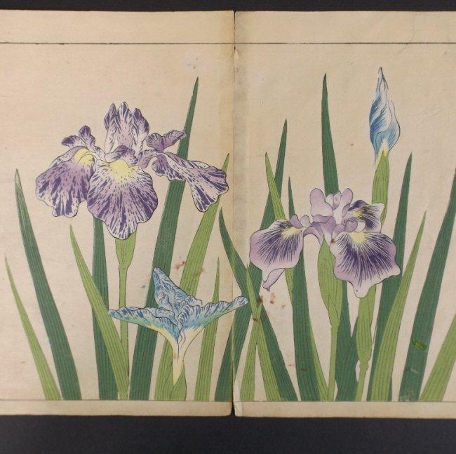 Sakai Hoitsu, Iris Flowers, 1st print woodblock 1907-08 - 2