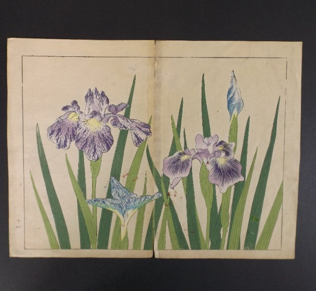 Sakai Hoitsu, Iris Flowers, 1st print woodblock 1907-08 - 3