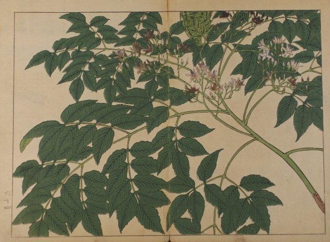 Sakai Hoitsu, Summer plants, 1st woodblock print 1907