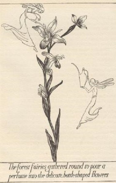 Newman, Fairy Flowers 1stEd 1926 Pogany Art Nouveau ill