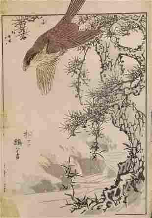 Yukoku Matsui, Sparrow-hawk, 1stPrint, 1901