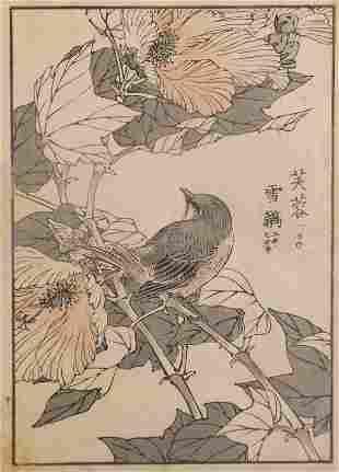 Yukoku Matsui, Cotton-rose, red-flanked bluetail 1901