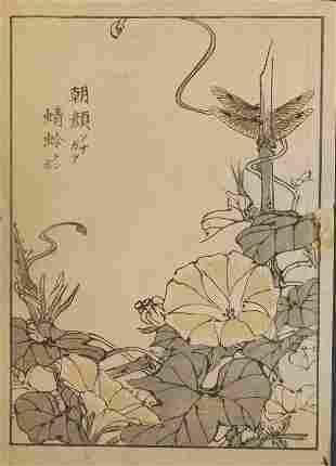 Yukoku Matsui, Japanese Morning Glory, 1st print 1901